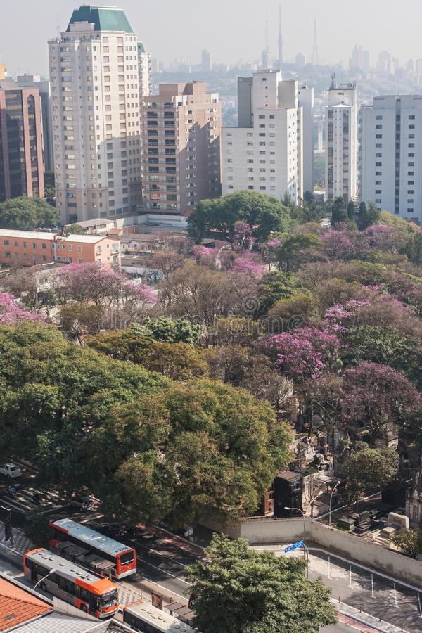Elevated Perspective Shows Buildings And Trees In Sao Paulo Brazil royalty free stock photos