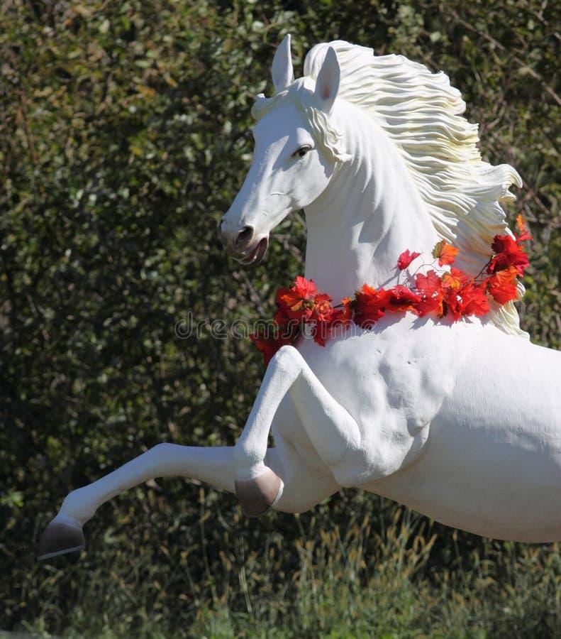 Elevazione del cavallo bianco fotografia stock libera da diritti