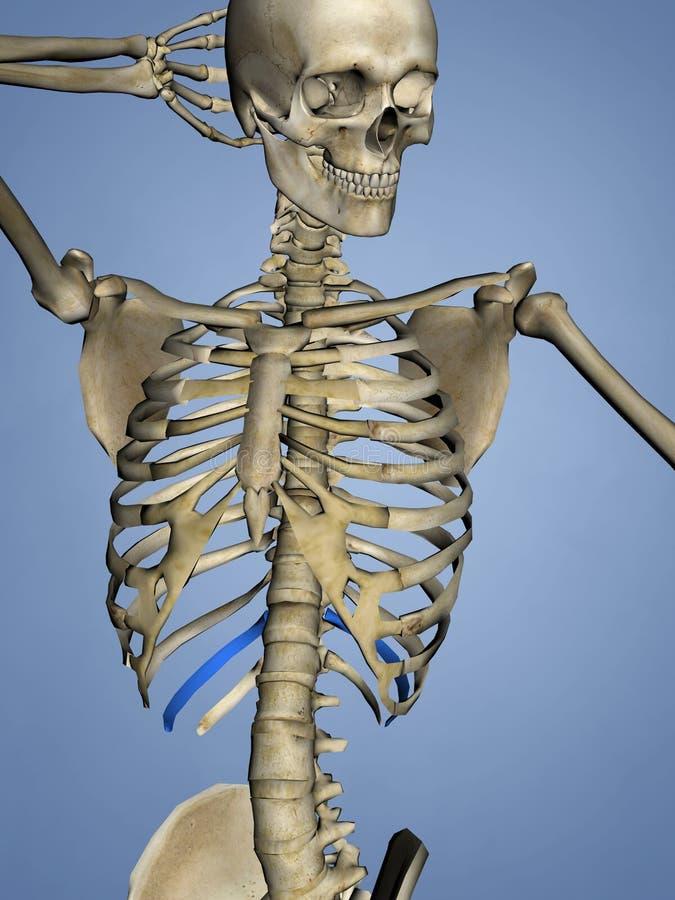 Encantador Anatomía De Un Desagüe Del Retrete Fotos - Imágenes de ...