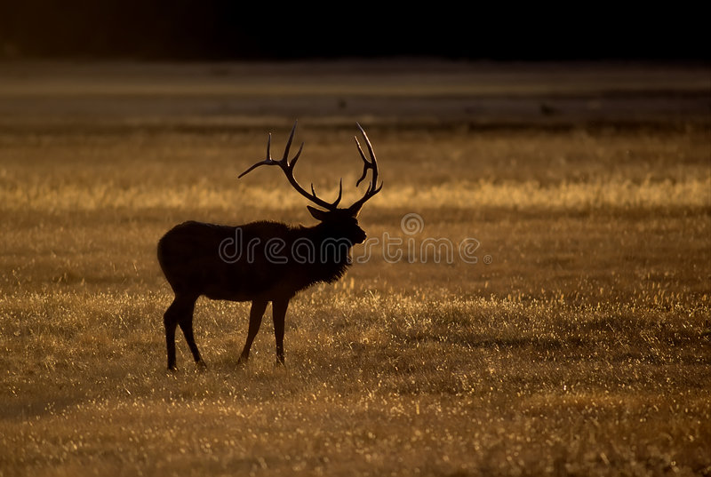 Download Elg stag silhouette stock image. Image of stag, horns - 5544255