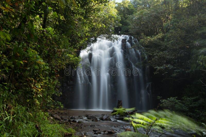 Download Elinjaa Falls stock photo. Image of atherton, falls, timelapse - 60081600