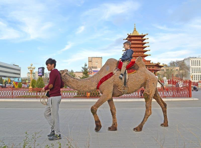 ELISTA, ΡΩΣΊΑ Το άτομο κυλά το παιδί στο α δύο-η καμήλα στην πλατεία Λένιν στοκ φωτογραφίες με δικαίωμα ελεύθερης χρήσης