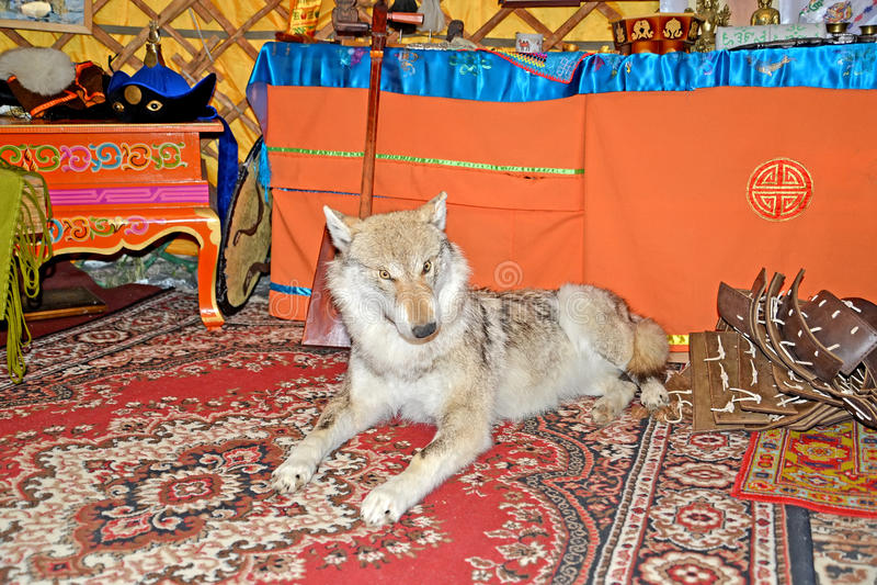 ELISTA, RÚSSIA Uma efígie de um lobo no yurta Kalmyk imagem de stock royalty free