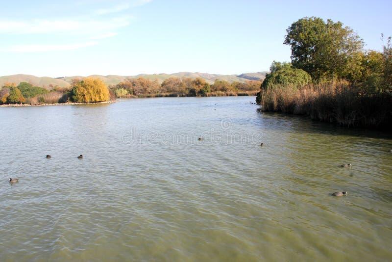 Elizabeth湖,中央公园,佛瑞蒙,加利福尼亚 库存照片