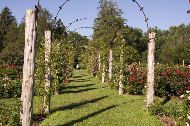 Elizabeth Park - Rose Arches royaltyfria bilder