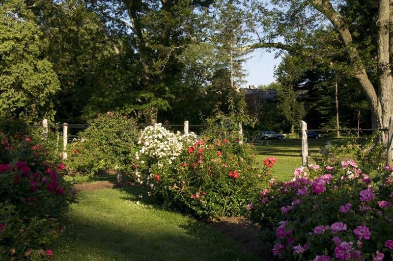 Elizabeth Park - Rose Garden hermosa foto de archivo libre de regalías