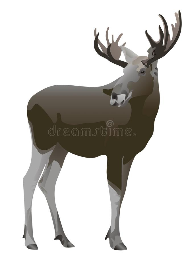 Download Elk Alces Alces Stock Photography - Image: 9527052