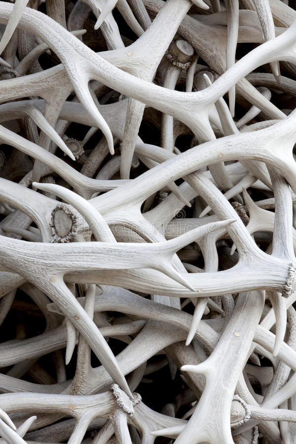 Elk Antlers (background). A pile of sun bleached elk antlers for background texture and pattern stock photography