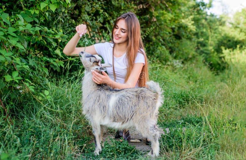 Elk dier is verschillend de voedende geit van de vrouwendierenarts landbouwbedrijf en de landbouwconcept De dieren zijn onze vrie stock foto's