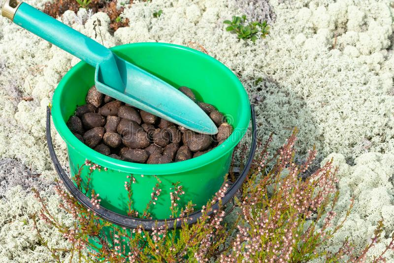 Elk droppings picked in bucket in the forest.  royalty free stock photos