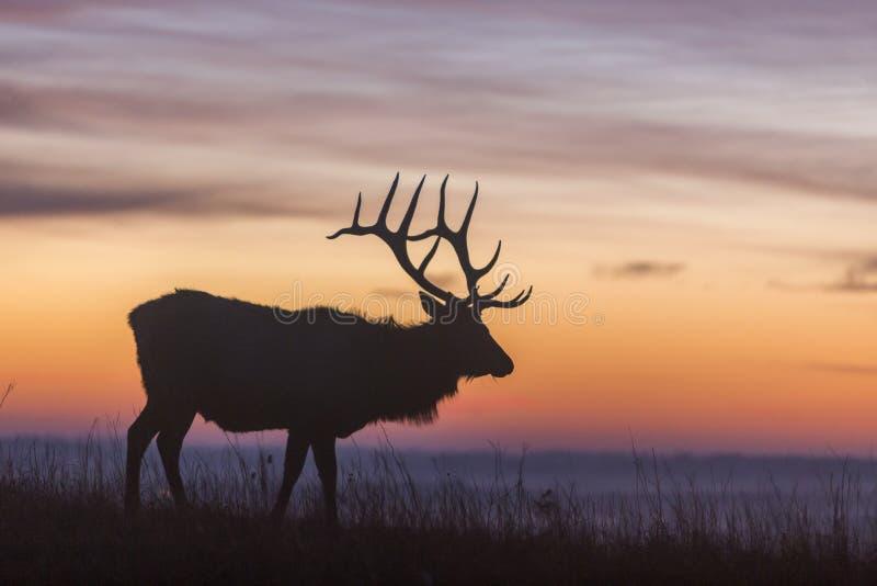 Elk silhouette at sunrise stock photos