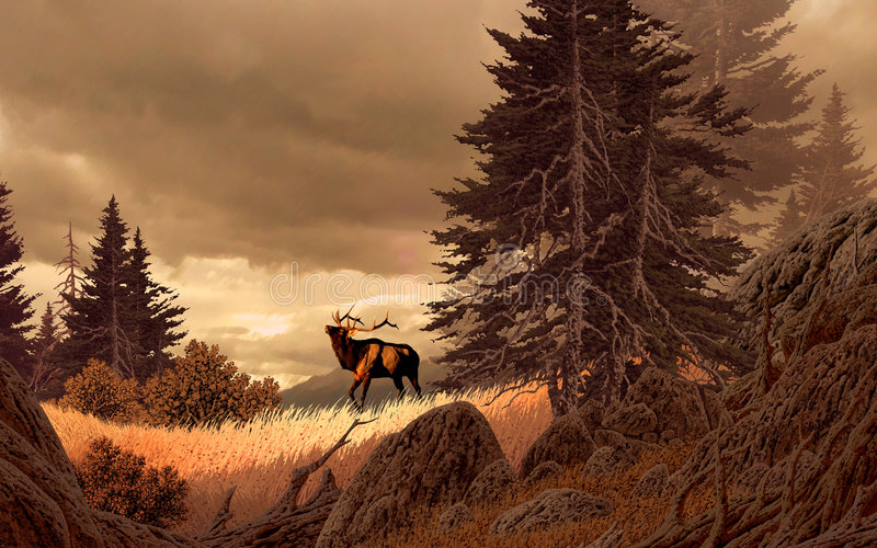 Elk in the Rocky Mountains royalty free illustration