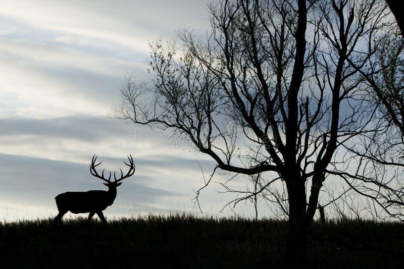 Elk Silhouette stock image