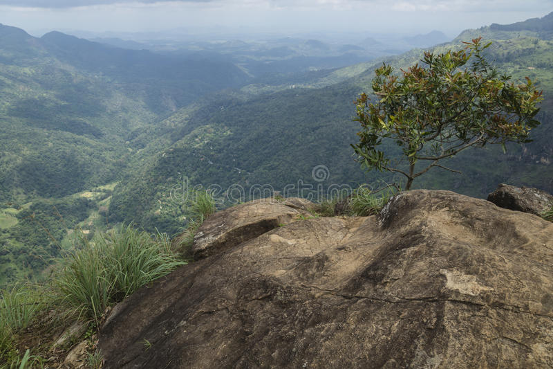 Ella Rock view into the valley, Ella, Sri Lanka. View from a large stone rock with a tree to the mountains and valley of Ella royalty free stock image