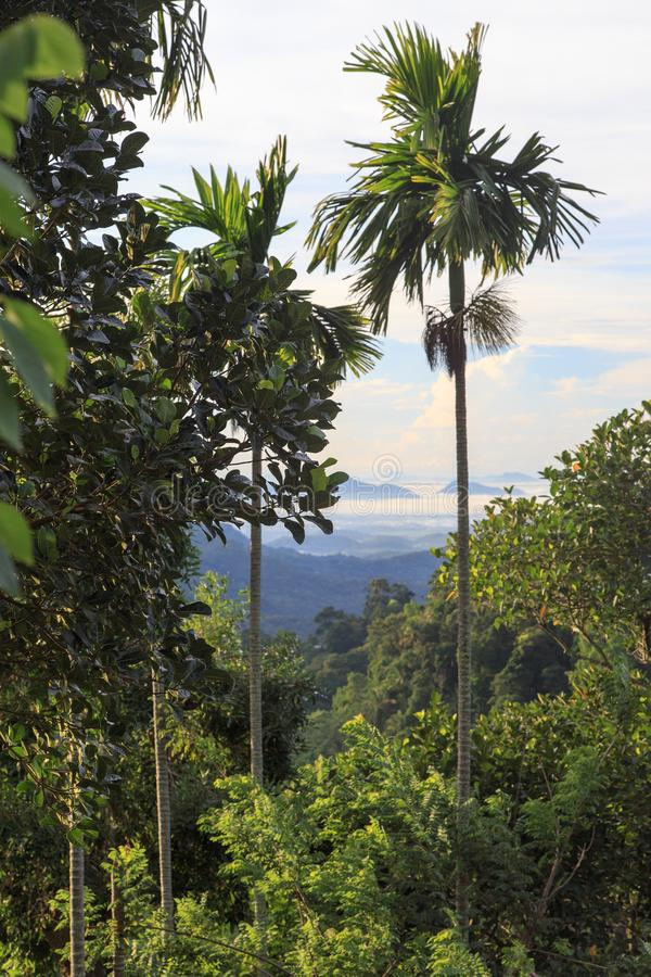 Ella Gap - Sri Lanka. Ella is surrounded by hills covered with cloud forests and tea plantations. The town has a cooler climate than surrounding lowlands, due to stock images