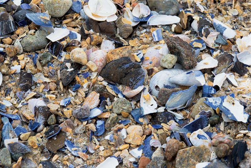 Ella vende la concha marina por la costa fotos de archivo