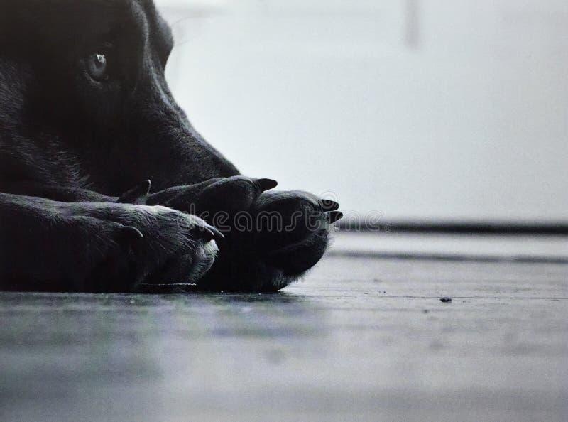 Ellie stock photo