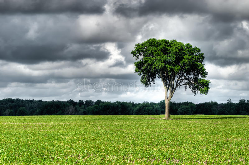 Elm with clouds royalty free stock images