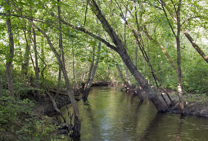 Elm creek solitude. Elm Creek in Maple Grove royalty free stock photos