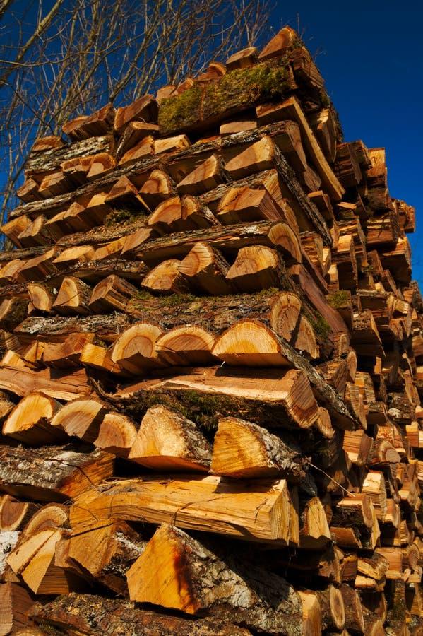 Elm firewood stock image