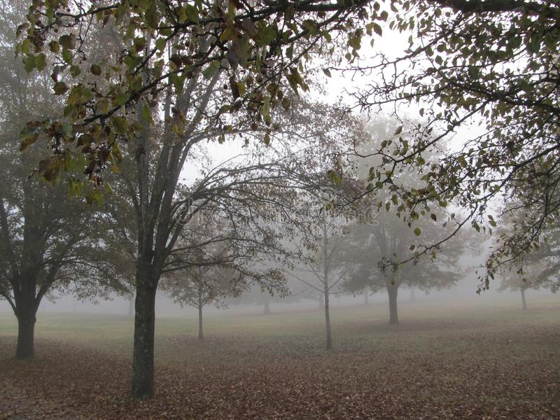 Elm Grove Park in the Fog3 royalty free stock images