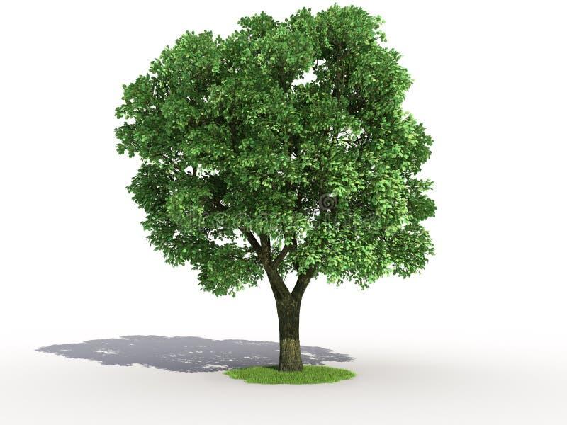 Elm Tree Stock Illustrations – 2,401 Elm Tree Stock Illustrations ...