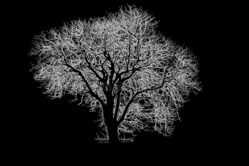 Abstract black and white tree silhouette. stock images