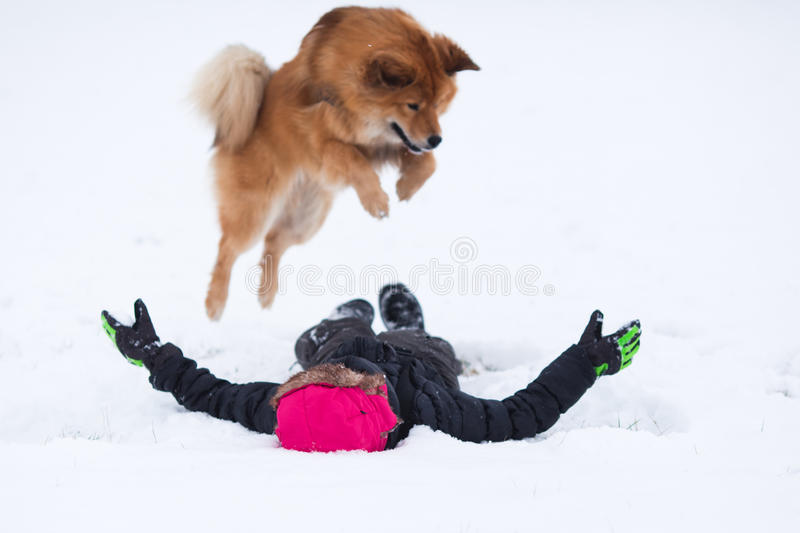 Elo dog jumps on a girl in the snow royalty free stock images