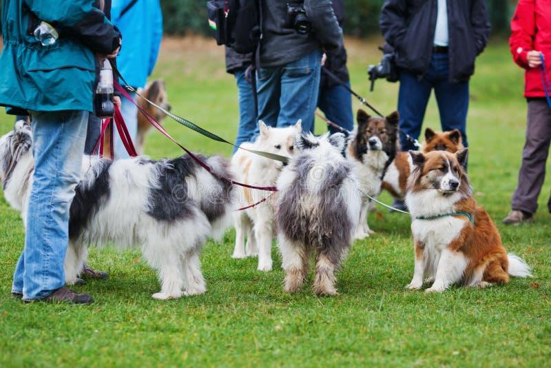 Elo hundar på ett hundställe arkivbild