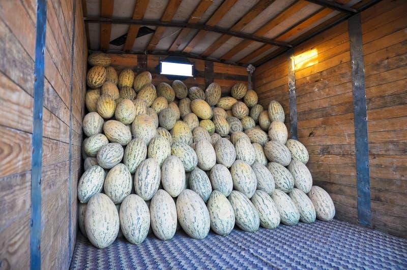 Elongated cultivar uzbeka melony są w ciężarówce zdjęcia stock