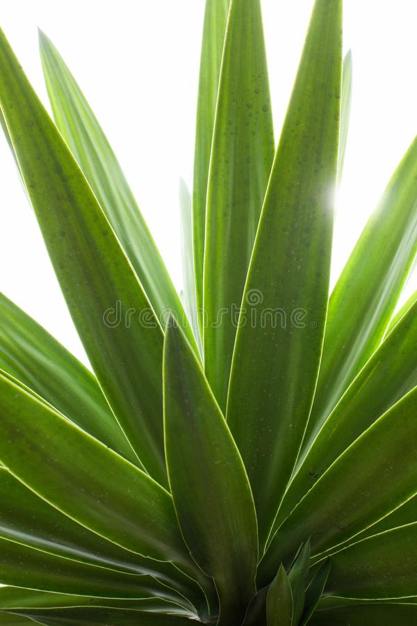 Elongated green leafs with back light royalty free stock photos