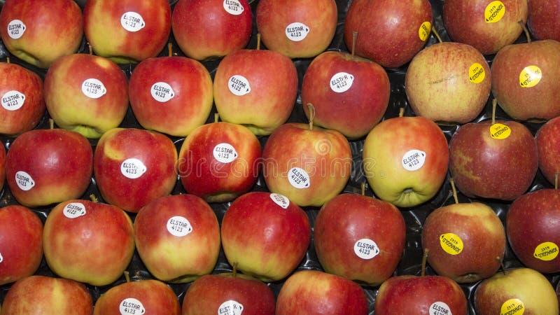 Elstar rött äpple arkivfoton