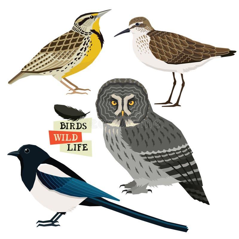 Elster, Bartkauz, Flussuferläufer, West-meadowlark Vogelsammlung Vektorillustration lokalisierte Gegenstände vektor abbildung