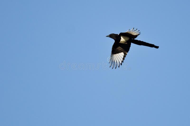 Elster-Fliegen in einem blauen Himmel stockfotografie