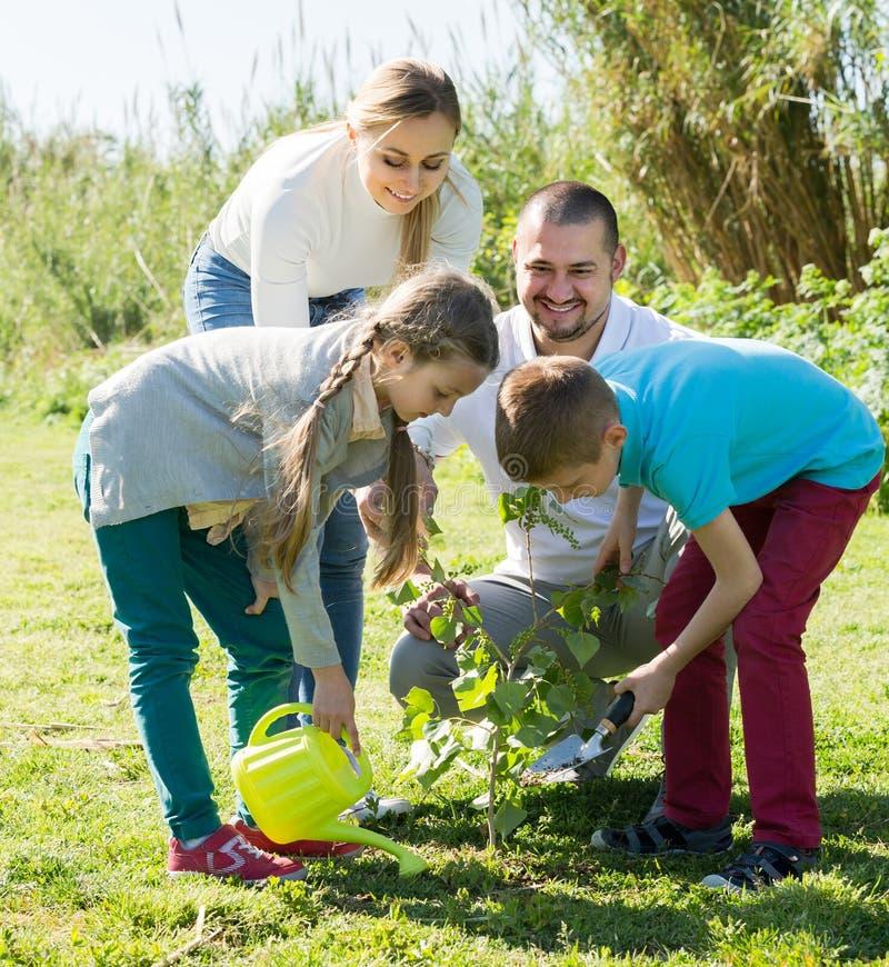 Eltern mit zwei Kindern, die einen Busch pflanzen stockfoto
