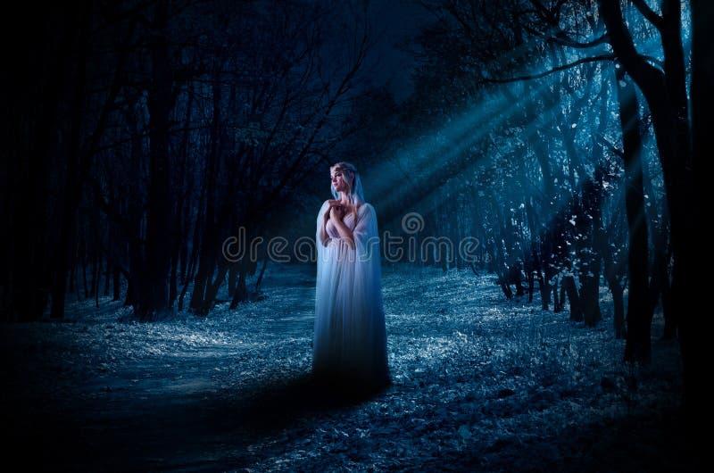 Elven-Mädchen im Nachtwald stockfoto