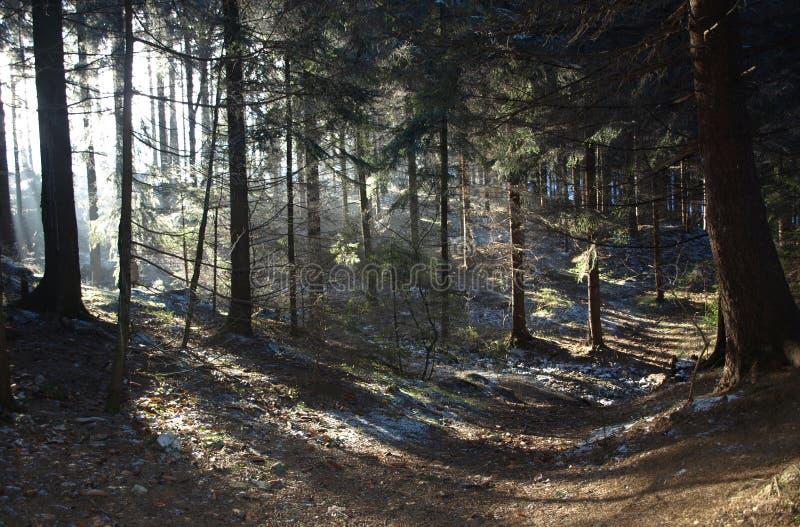 Elves land stock image