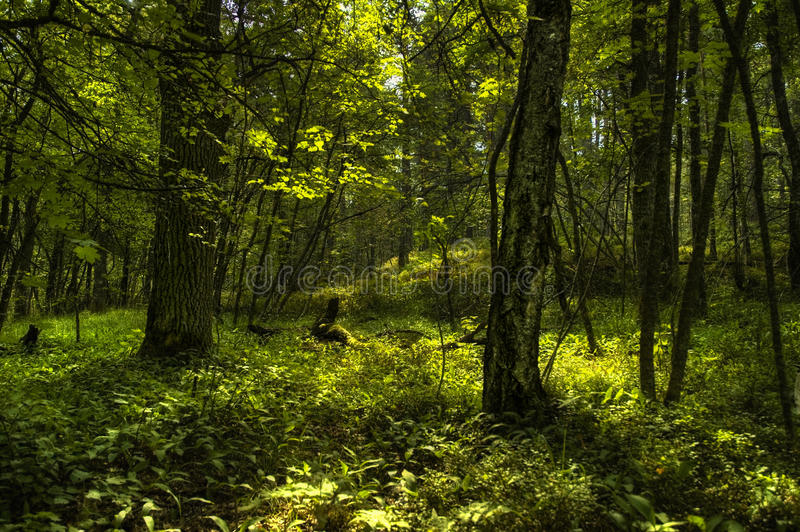 Elvish forest