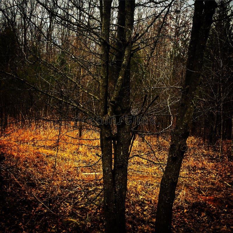 Elvish Forrest στοκ εικόνα
