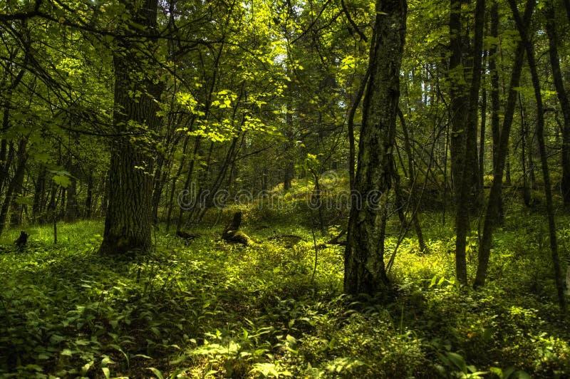 Elvish Wald lizenzfreie stockfotografie