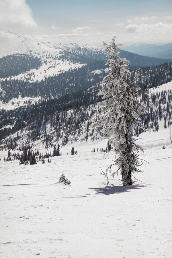 Ely auf dem Hintergrund von einer ausgezeichneten Berglandschaft stockfotografie