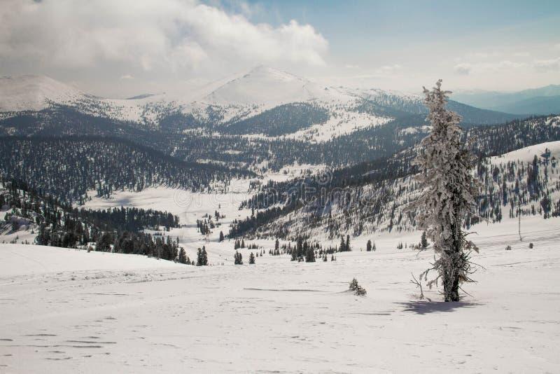 Ely auf dem Hintergrund von einer ausgezeichneten Berglandschaft lizenzfreie stockfotos