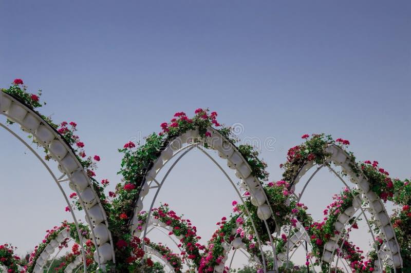 Em abril de 2015 Aleia do parque com muitas flores dubai imagem de stock