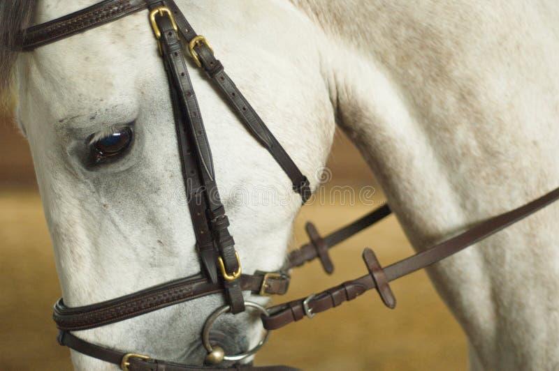 Em meus olhos do cavalo fotos de stock