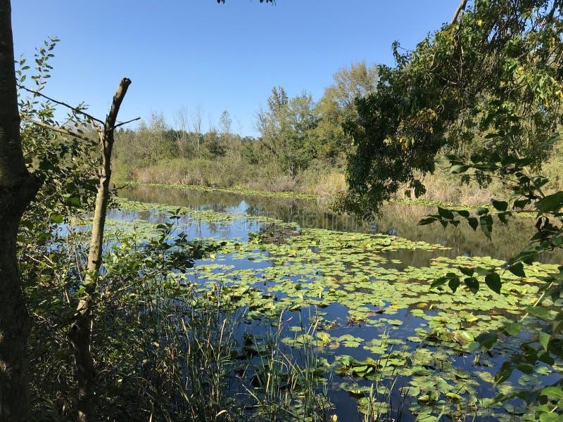 EM OUTUBRO DE 2018, a floresta de água doce em segundo a mais grande do pântano de Turquia: Acarlar em Sakarya, Turquia fotos de stock