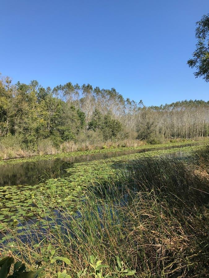 EM OUTUBRO DE 2018, a floresta de água doce em segundo a mais grande do pântano de Turquia: Acarlar em Sakarya, Turquia imagem de stock