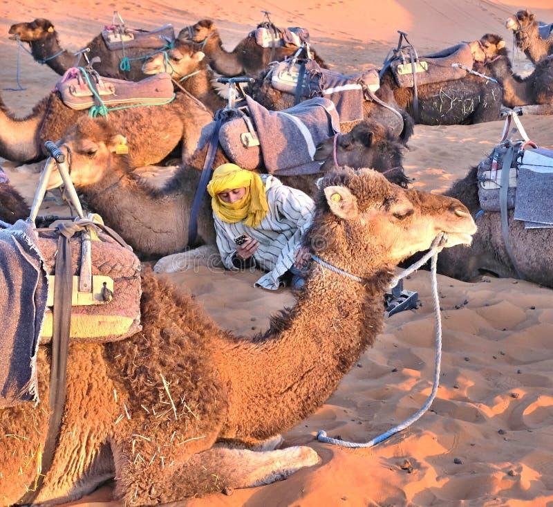 Em Sahara Desert, em férias, um homem novo do Berber na roupa nacional - um motorista do camelo contrata em um telefone do smartp fotografia de stock royalty free