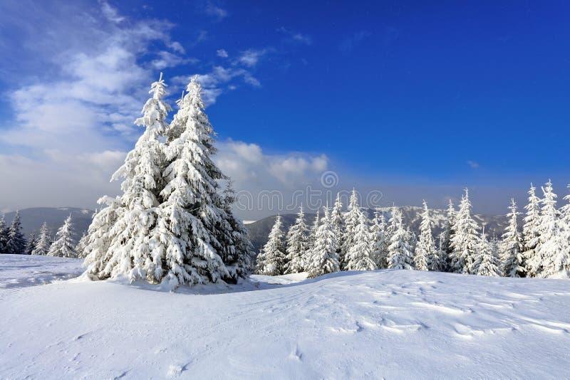 Em um dia bonito gelado entre montanhas altas e picos são as árvores mágicas cobertas com a neve macia branca imagens de stock royalty free