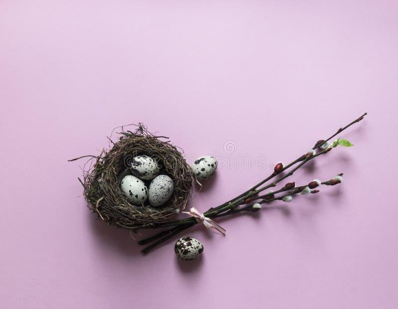 Em um fundo cor-de-rosa, os ramos do salgueiro floresceram ninho verde das codorniz dos ovos da folha com opinião de cor de três  imagens de stock royalty free