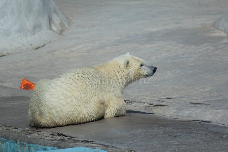 Em um jardim zoológico foto de stock royalty free